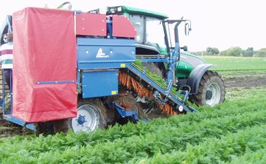 Технология сбора урожая моркови